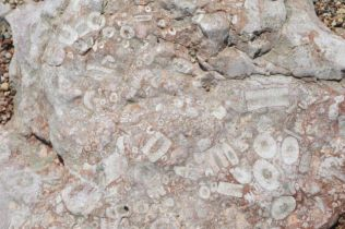 Fossils! Loads of them.