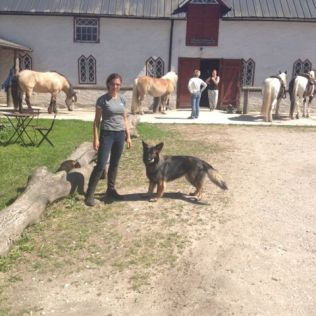 My ideal set up, dogs and horses :)