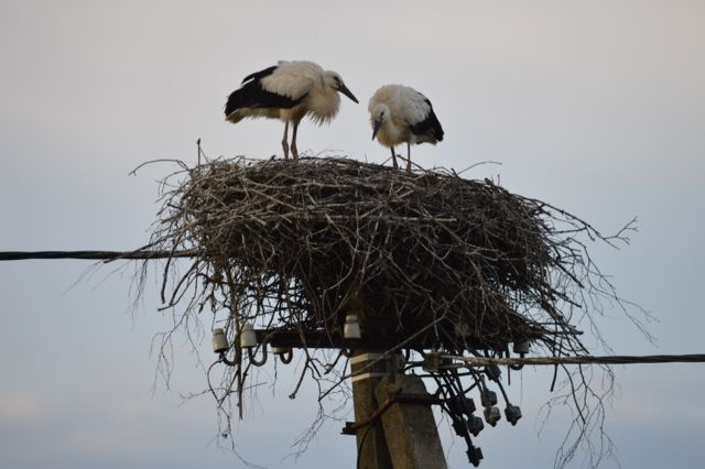 Stork nests on telegraph poles, we were amazed by this, now we have seen them all over the place and realise it's very common.