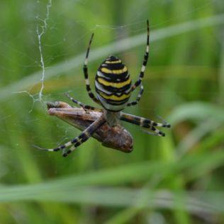 Random spider shot....
