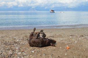 Leo loves the beach.