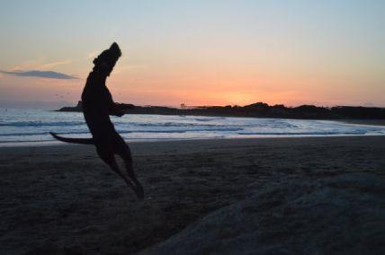 Dog agility at the beach.