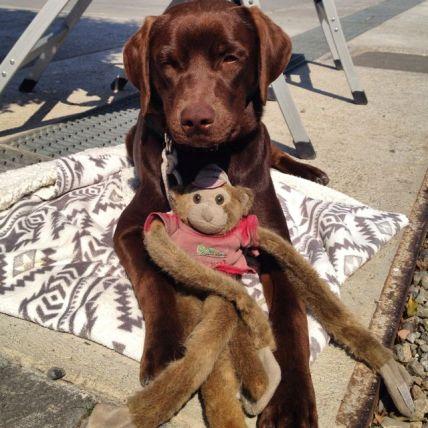 Leo's friend monkey.